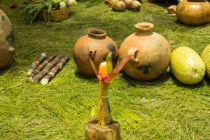 Basij-grass-plant-gourd-cucurbita-vegetable