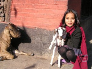 Helpline NGO, volunteer program in Nepal, volunteering in Nepal