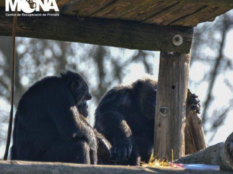 primate center in Spain