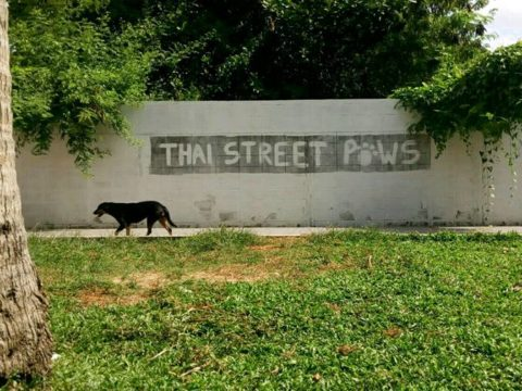 dog shelter in Thailand