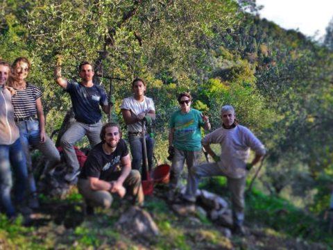free wwoof in tuscany