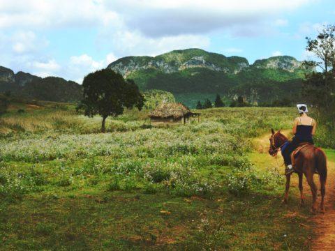 WWOOF - horses