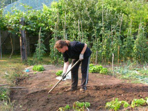 WWOOF gardening