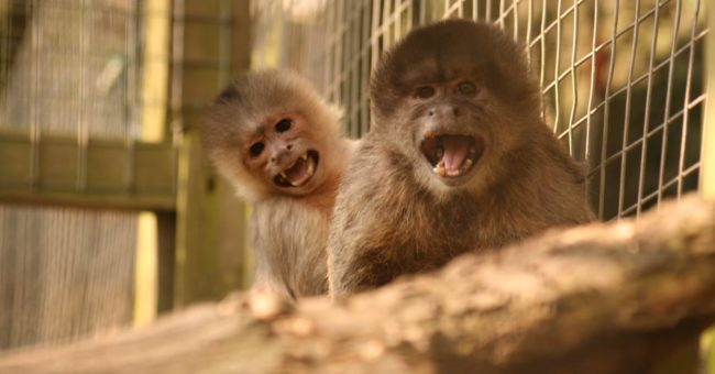 monkey sanctuary, free volunteering, volunteer