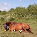 horses, blind horse, animal sanctuary, horse rescue center, wwoof, wwoofing, wwoof in Bulgaria