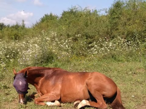 horses, blind horse, animal sanctuary, horse rescue center, wwoof, wwoofing, wwoof in Bulgaria