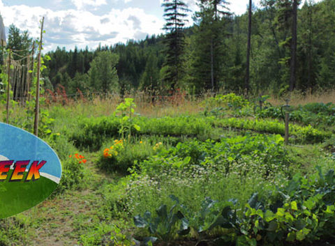 wwoof in Canada, workaway in Canada, wwoofing,wwoof, organic farms in Usa, wwoofers community, wwoofing community, community in Usa, eco-villages in the Canada, eco-village, eco-villages Canada, British Columbia farm,