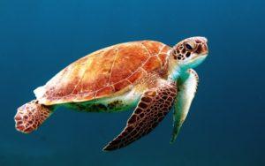 volunteering in Malaysia, Marine conservation, free volunteer program in Malaysia