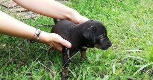 dog sitting, dogsitting, pet sitting, petsitting, dog paradise, dogs, thailand