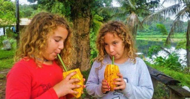 Cacao Farm, cacao, organic farm, wwoofing, volunteering, volunteer abroad, Brazil, cocoa