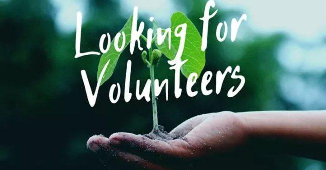 organic farm, wwoof, volunteering, voluntariado, south america, ecuador, farming, wwoofer, wwoofing, workaway