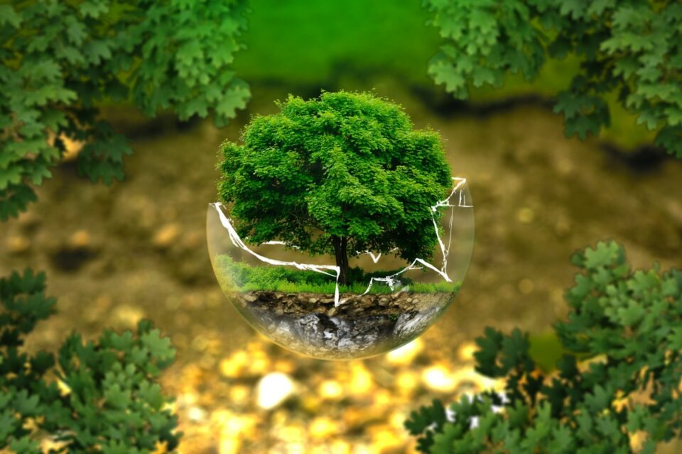 environmental, protection, nature, conservation, ecology, bio, glass, ball, forest green, off-the-grid community