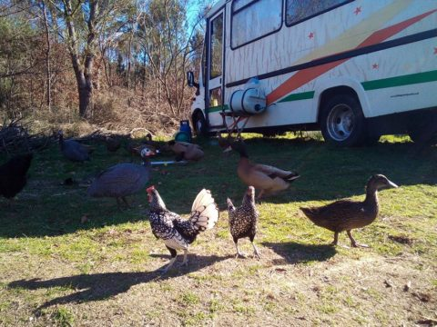 volunteer project, food forest, gardening, forest garden, vanlife, alternative lifestyles, off grid, volunteering, Voluntouring, voluntourism, volunteer abroad, Portugal, off grid