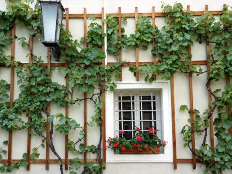 guesthouse, bed and breakfast, hospitality, hostel, exchange, px, pex, pixa, voluntouring, voluntourism