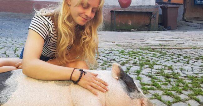 Farm, animal sanctuary, Germany, animal shelter, volunteer, voluntouring, voluntourism, volunteering, project, team, vegan, love, pig