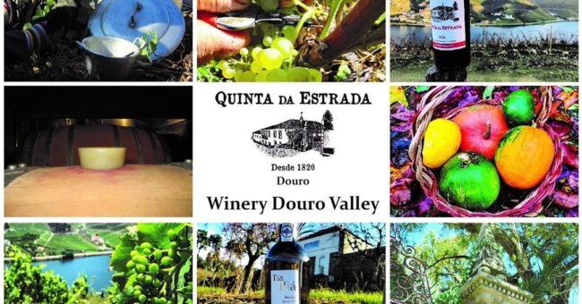 vino, fattoria, portogallo, wwoof, workaway, scambio, vitto e alloggio