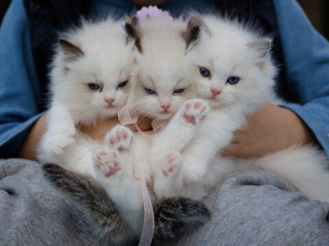cat shelter, sanctuary, rescue centre, paw, animal, volunteer, program, project, opportunity, exchange, hostel, cat, px, pix, pex